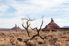 Tree in Valley of the Gods Royalty Free Stock Photo