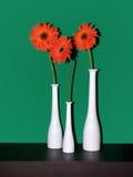 Tree vases Stock Photography