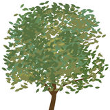 Tree Vector stock illustration