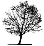 Tree (vector) royalty free illustration