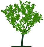 Tree (vector) Stock Photo