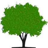 Tree (vector) Stock Photography