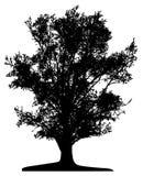 Tree (vector) vector illustration