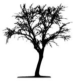 Tree (vector) Royalty Free Stock Images
