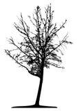 Tree (vector) Royalty Free Stock Photography