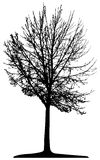 Tree (vector) Stock Photos