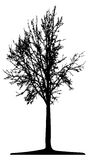 Tree (vector) Stock Images