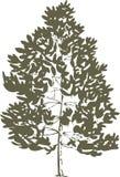 Tree vector. Stock Image