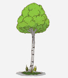 Tree Vector Royalty Free Stock Image