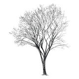 Tree Vector - Hand Drawn Stock Images