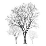 Tree Vector - Hand Drawn Stock Photography