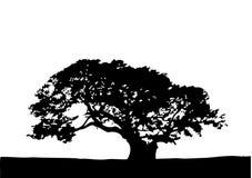 Tree - vector illustration Stock Photo