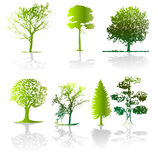 Tree - vector illustration Royalty Free Stock Photos