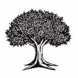 Tree Vector Illustration Logo Template. Tree Vector Illustration Drawing Logo Template Royalty Free Stock Image