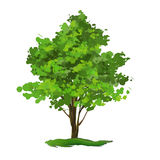 Tree vector illustration  hand drawn  painted Stock Photography