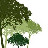 Tree vector Stock Photography