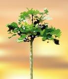 Tree vector logo on blur background sunset Royalty Free Stock Photo