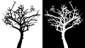 Tree vector silhouette Royalty Free Stock Image