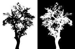 Tree vector silhouette Stock Images