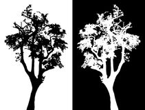 Tree vector silhouette Stock Photography