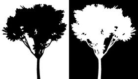 Tree vector silhouette Royalty Free Stock Photo