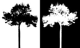 Tree vector silhouette Royalty Free Stock Images