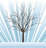 tree vector winter Στοκ φωτογραφία με δικαίωμα ελεύθερης χρήσης