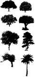 Tree silhouette vectors Stock Photos