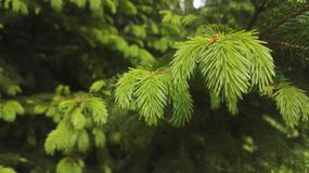 Tree, Vegetation, Ecosystem, Branch royalty free stock image
