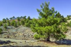 Tree, Vegetation, Ecosystem, Woody Plant royalty free stock photography
