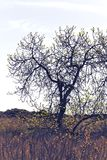Tree and vegetation next to the beach. Tree with almost no leaves at the end of winter Stock Images