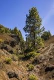 Tree, Vegetation, Wilderness, Woody Plant stock images
