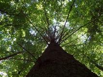 Tree, Vegetation, Woody Plant, Ecosystem royalty free stock photo