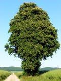 Tree, Vegetation, Woody Plant, Plant stock images