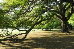 Tree, Vegetation, Woody Plant, Plant royalty free stock image