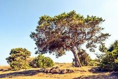 Tree, Vegetation, Woody Plant, Sky stock photos