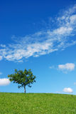 Tree vertical. Tree on meadow against blue sky with clouds Stock Images