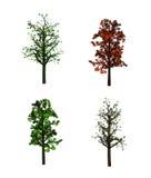Tree,, Royalty Free Stock Photo