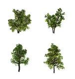 Tree,, Royalty Free Stock Image