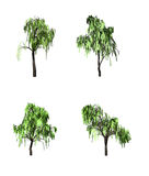 Tree,, Stock Images