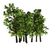 Tree,, Stock Photos