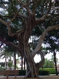 Tree. Very old tree Royalty Free Stock Photos