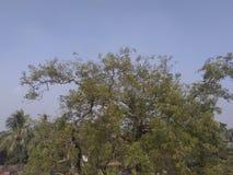 A tree royalty free stock photo