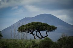 Tree and Vesuvius vulcan in the background. stock photography