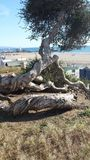 Tree vid havet Royaltyfri Foto