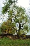 Tree vid laken arkivbilder