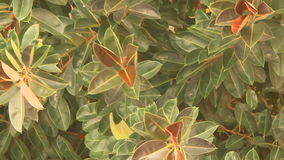 Tree view from above stock footage