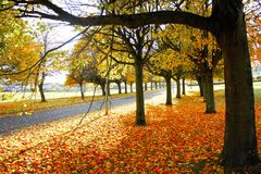 Tree. View of the beautiful autumn tree Stock Photography