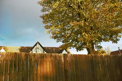 Tree. View of the beautiful autumn tree Royalty Free Stock Photos