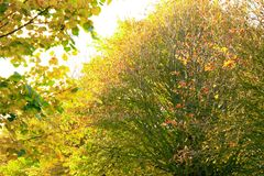 Tree. View of the beautiful autumn tree Royalty Free Stock Image
